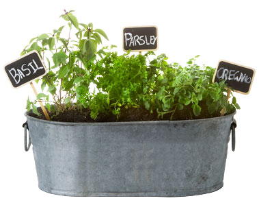 Potted Herb Garden Ideas who Who